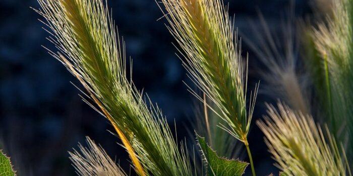 desarrollo-rural-abona-mas-de-1,2-millones-de-euros-para-la-instalacion-de-jovenes-agricultores-y-agricultoras